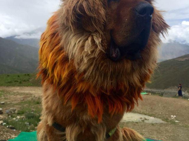 西藏动物图片名字