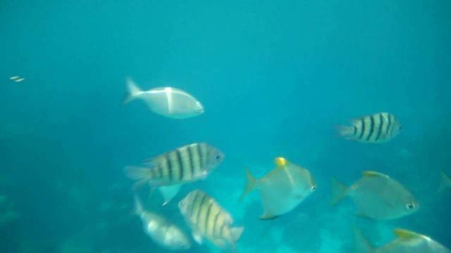 热浪岛我成了一条鱼