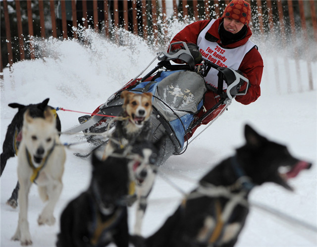 哈士奇是名副其实的雪橇犬,在雪地里跑起来简直停不下来。出发前就不停地狂叫,简直比坐在雪橇上的人还要迫切。等到跑起来了,丝毫不怕冷和累,就像嚼了炫迈一样,根本停不下来!如果你想要停下来,就要使劲踩刹车,刹车的震动会传递给狗狗们,不过它们突然停下可会不高兴的,回头瞅你,满脸写着你咋啦?又咋了?打扰它们奔跑,小心它们凶你呦。