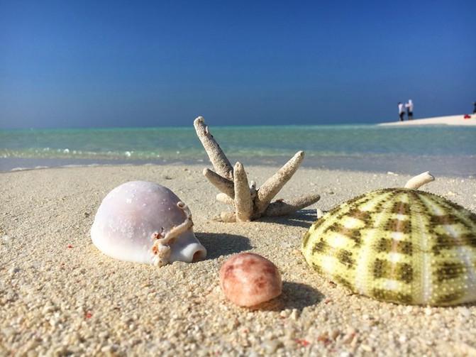 全富岛 全富岛位于中国西沙群岛永乐环礁的东北缘,地理坐标为北纬1632,东经11140。该岛东西长360米,南北宽240米,面积为0.02平方公里,海拔约1米。该岛距鸭公岛约3海里,是一处无人居住岛。 这里珊瑚礁区生物种类丰富,有56种之多。该岛东西长360米,南北宽240米,高2.2米。四周高中间低,面积0.