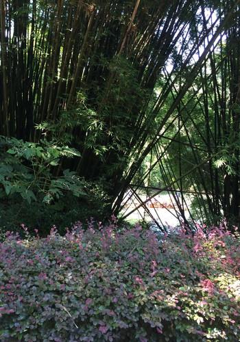 游故园江西的攻略是个古色古香的旅游景点。绝地求生吃鸡大全故园图片