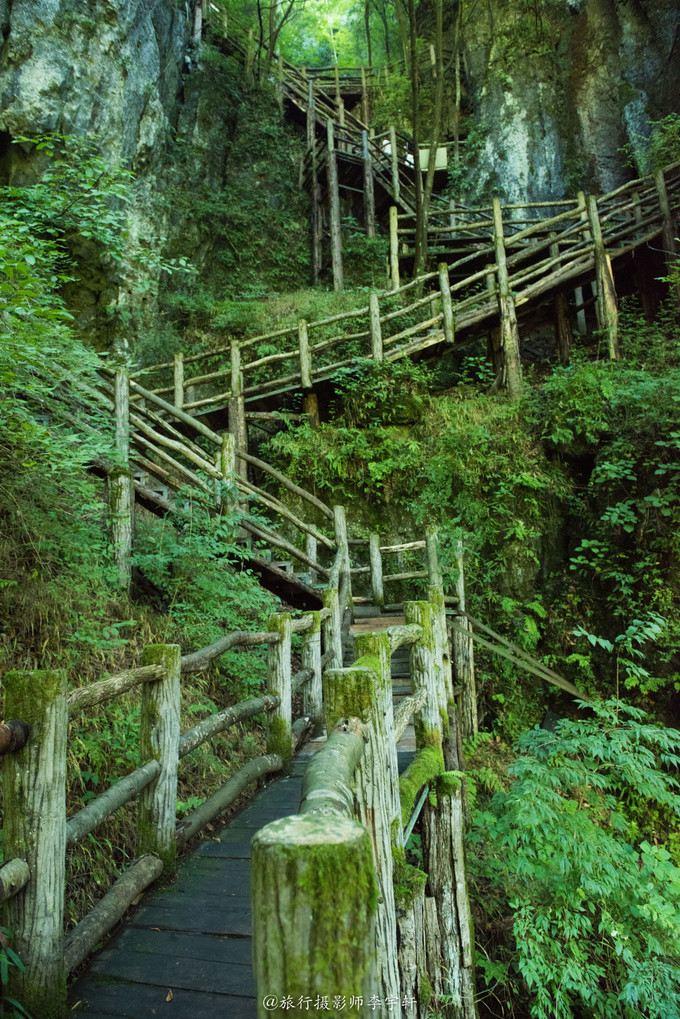 有很多古树几乎是处于自生自灭的原始状态,围栏都生长着厚厚的青苔