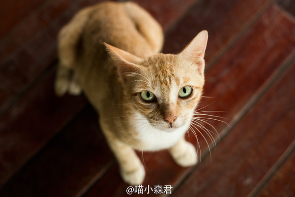 码头上的小猫咪,无辜的小眼神很可爱呀