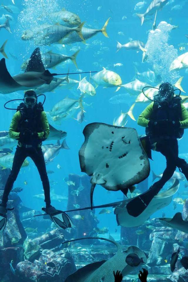迪拜亚特兰蒂斯酒店 世界的人工奇迹图片