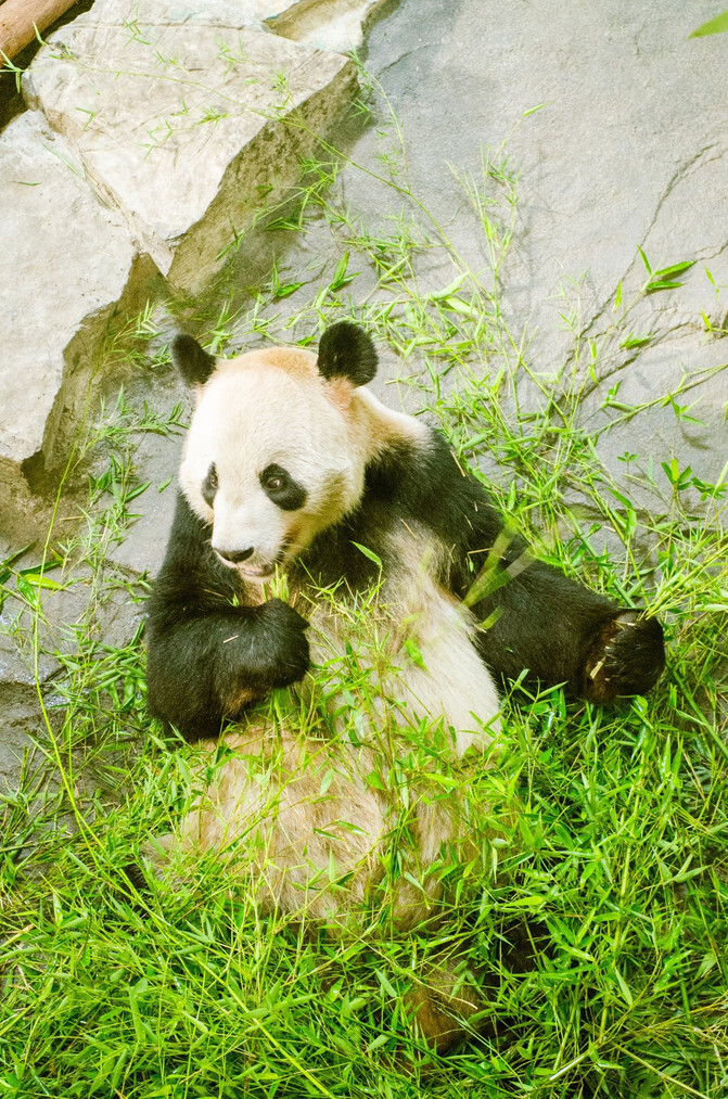 树叶做小动物熊猫图片大全