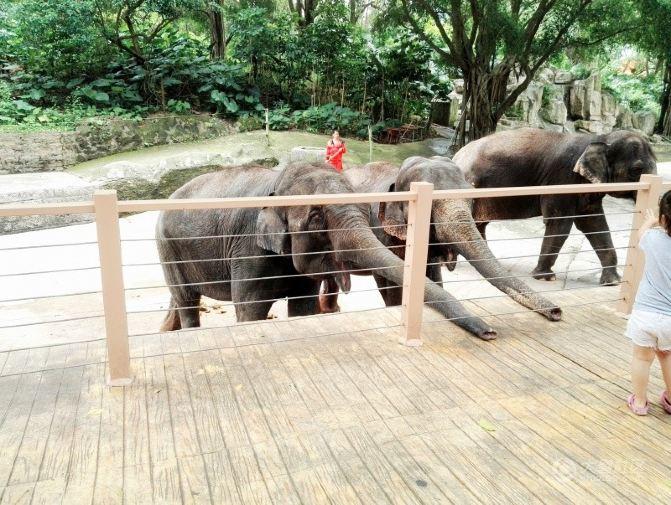 欢庆六一:小孩子大孩子老孩子畅游深圳野生动物园