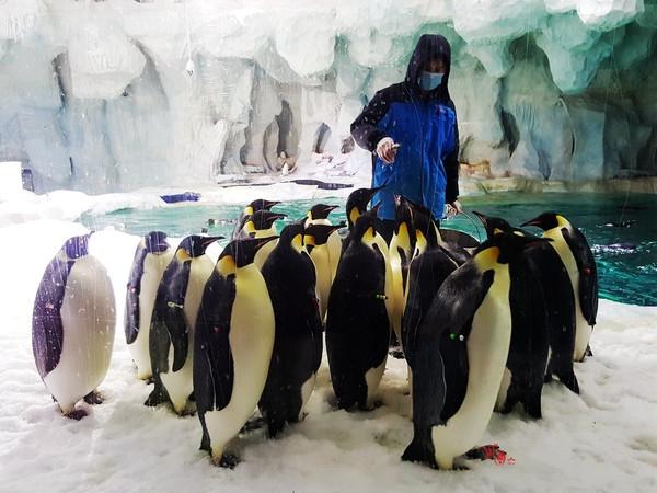 壁纸 动物 企鹅 600_450