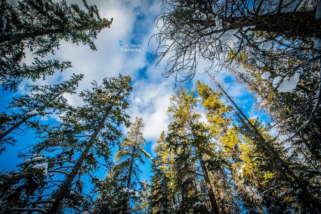 落基山脉的冰雪童话-畅游加拿大艾伯塔!