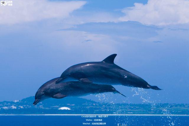 海豚高高的跃出水面溅起水花一片观众的欢呼声此起彼