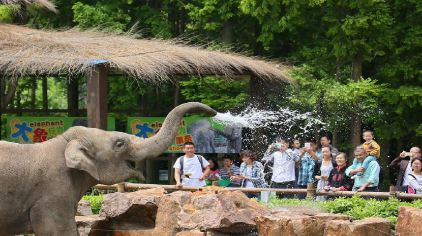 浦东机场迪士尼度假区店)1晚+可加购上海野生动物园