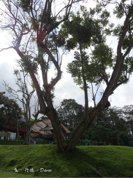 旅游在菲国的乐园下【漫游迹@菲律宾上海】达沃阳光攻略迪士尼飞行图片