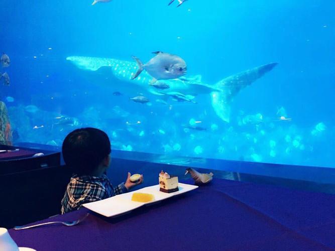 宝贝,我们看鱼去--珠海横琴海洋世界亲子游-珠的游戏攻略视频图片