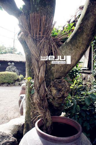 壁纸 盆景 盆栽 树 植物 332_500 竖版 竖屏 手机