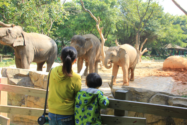小手拉大手—广州长隆野生动物园之旅