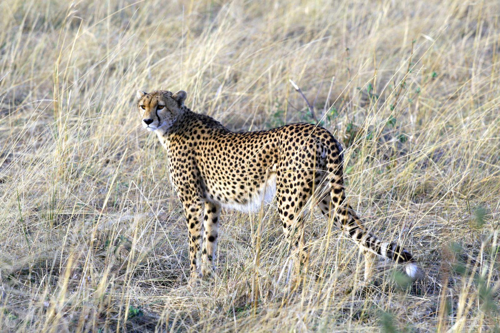 《动物世界》拍摄地,全世界风景最美的野生动物保护