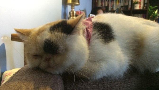 壁纸 动物 兔子 671_380