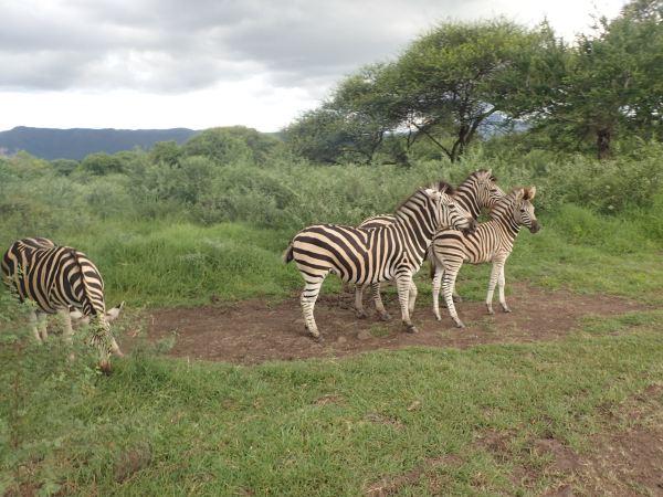 感受到的是非洲大自然的豪爽