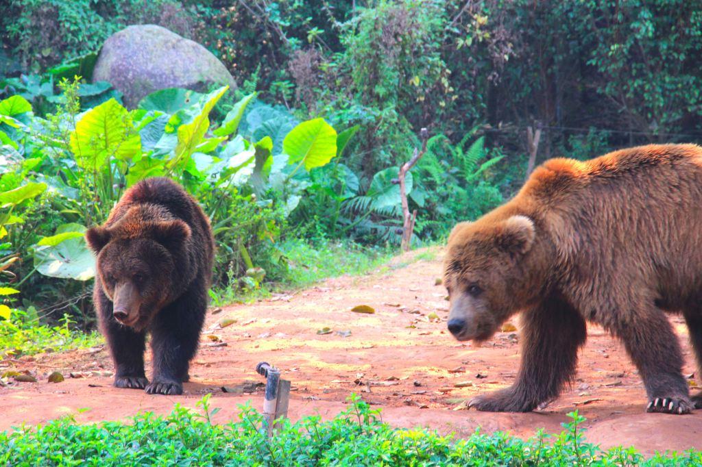 长隆野生动物世界的奇妙新体验