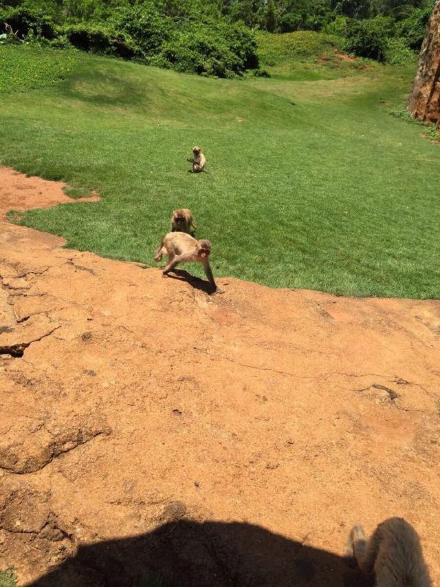 亲子动物园之旅