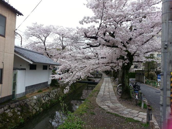 日本樱花季自由行,朋友说是美食美景美女(羞羞