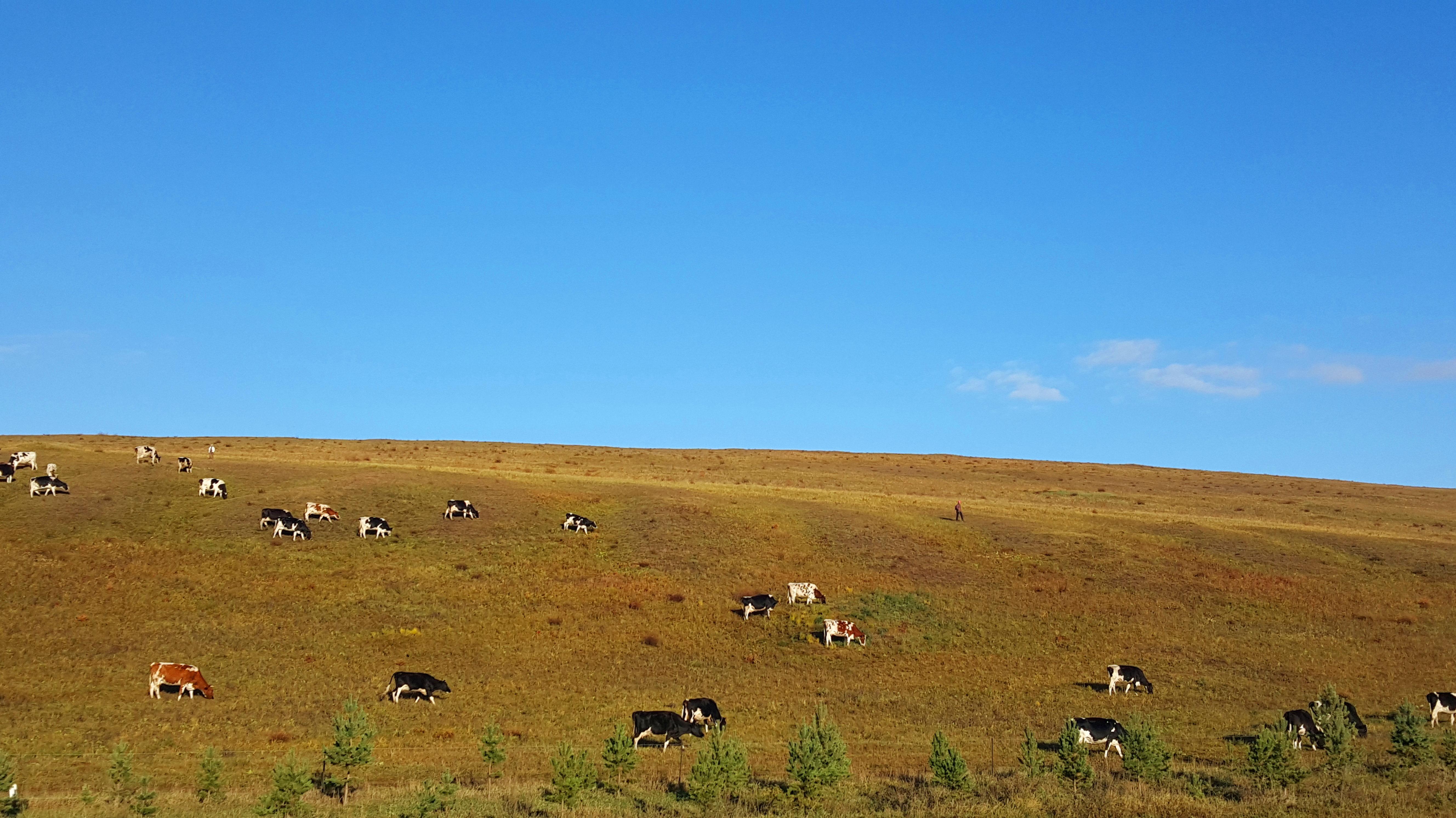 遇见初秋的你一内蒙古呼伦贝尔大草原之旅