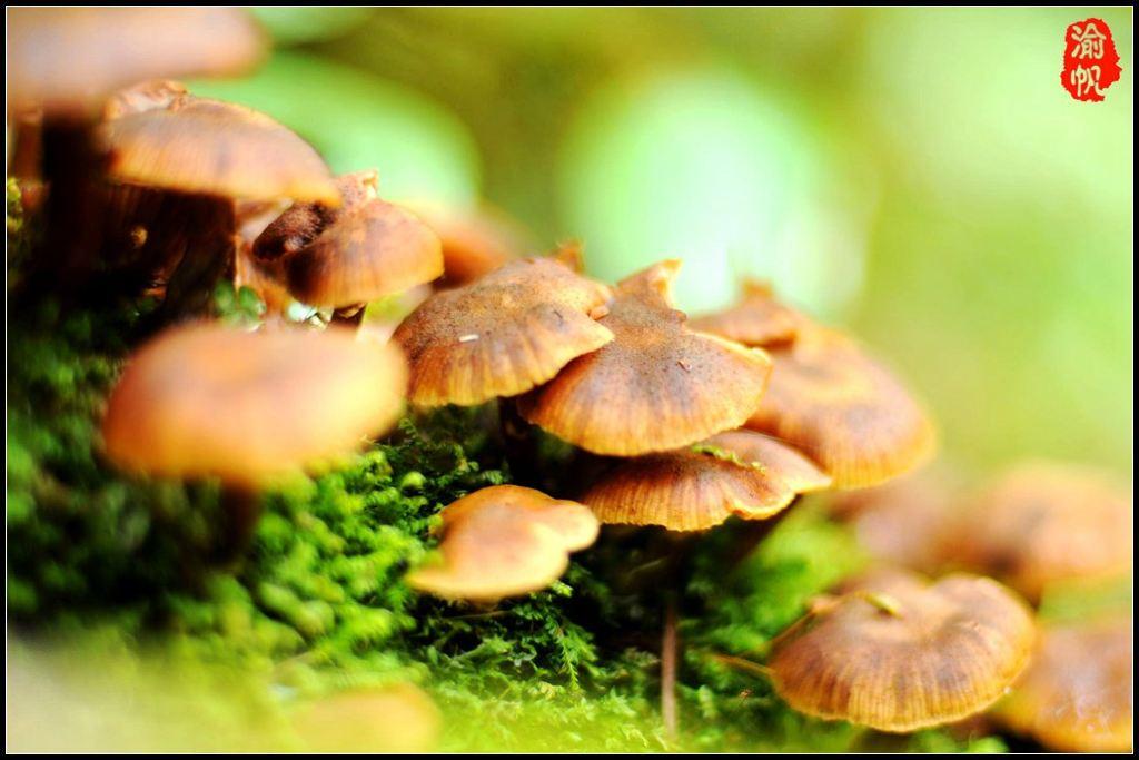 走入森林,古树琼枝,上面长满了苔藓,甚至随处都可以看到很多的野生菌