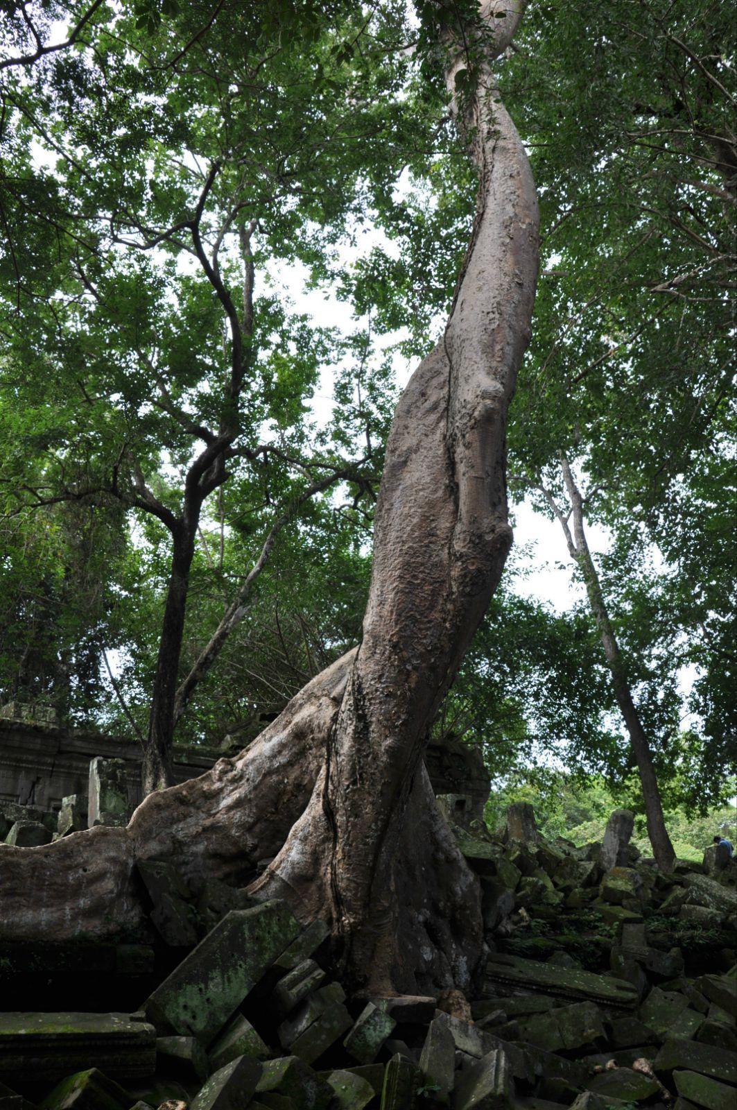 壁纸 树 榕树 1063_1600 竖版 竖屏 手机