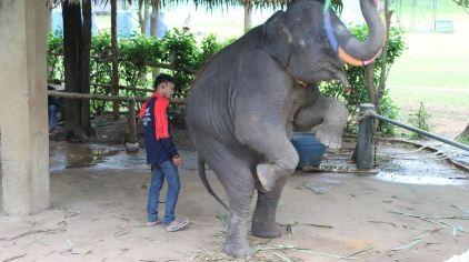 普吉岛动物园 (3)