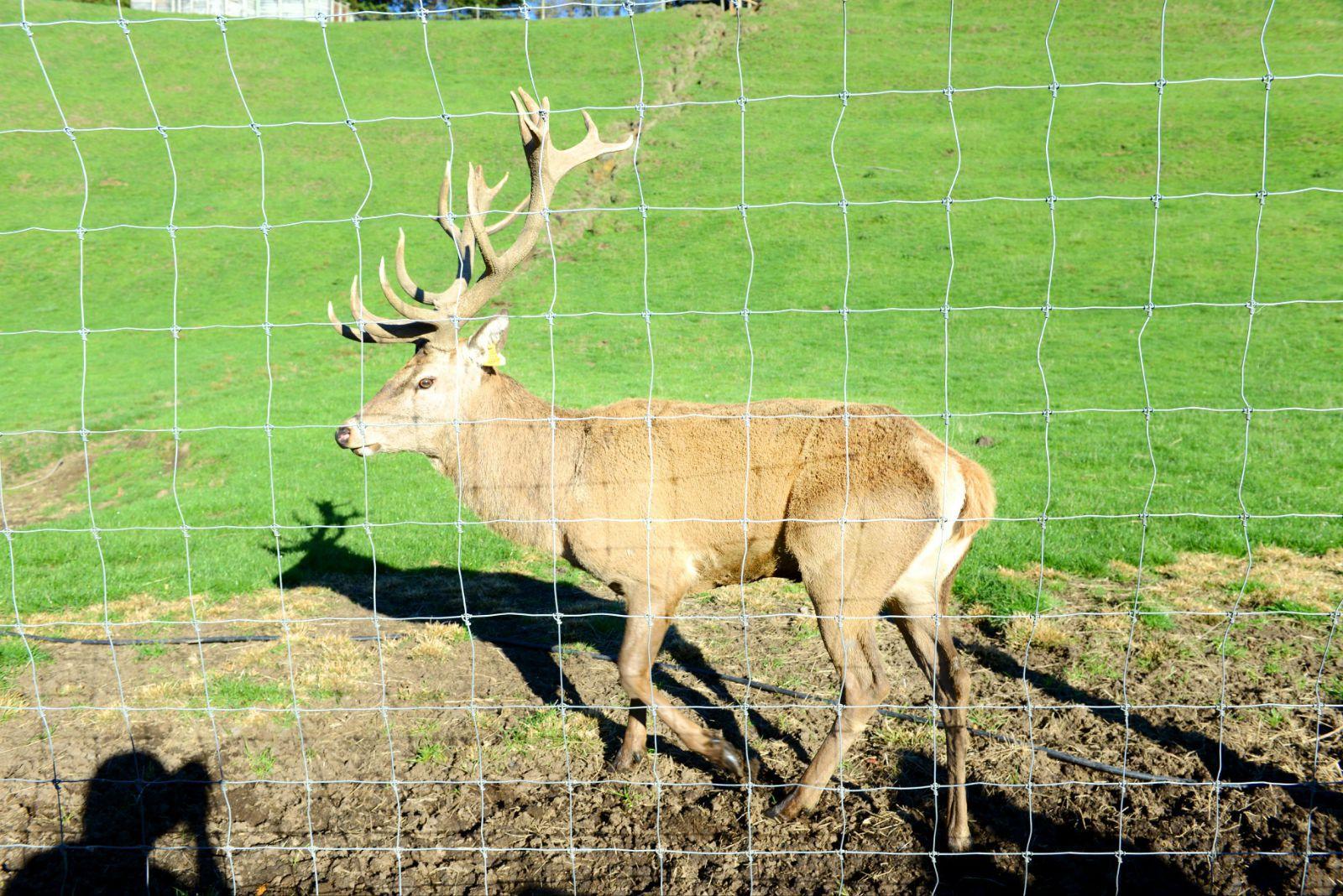 真丝手绘背景鹿