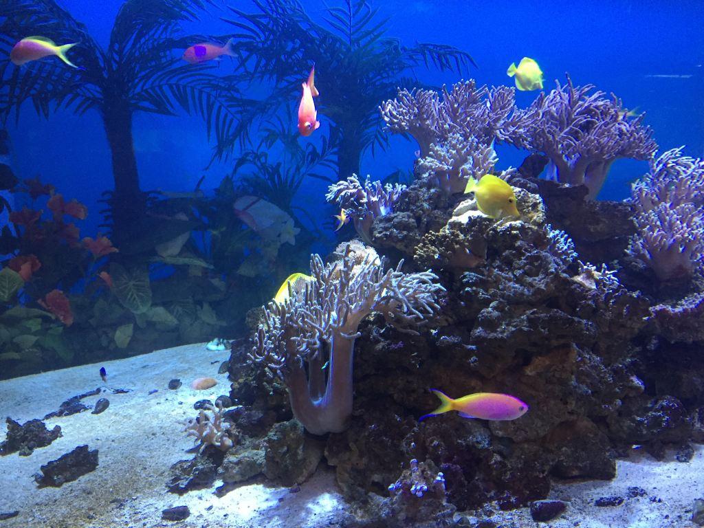 壁纸 海底 海底世界 海洋馆 水族馆 桌面 1024_768