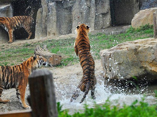 0米—常州淹城野生动物园