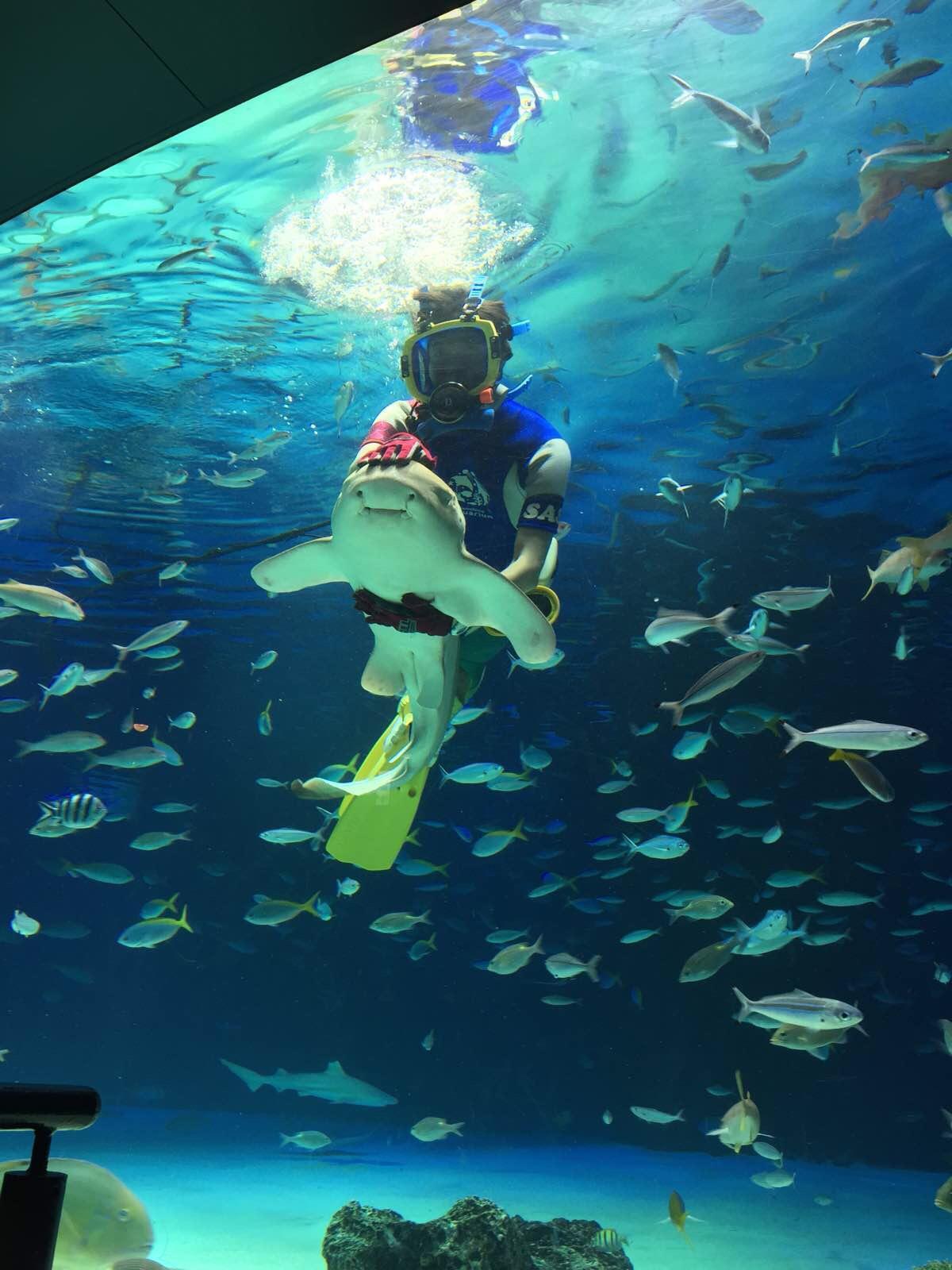 壁纸 海底 海底世界 海洋馆 水族馆 1200_1600 竖版 竖屏 手机