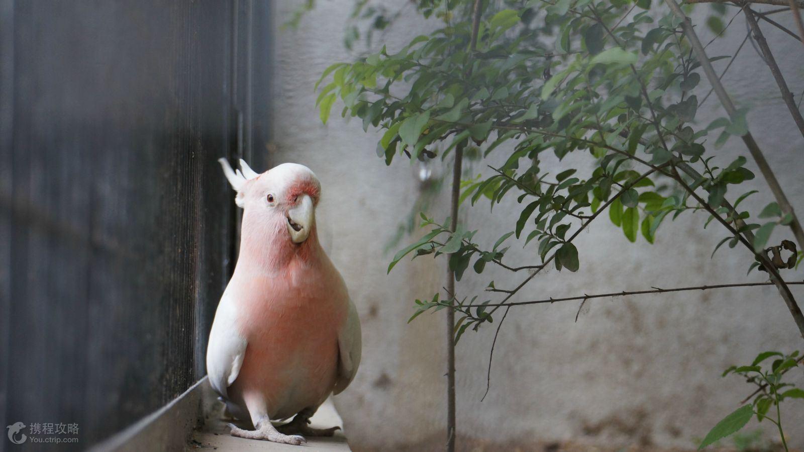 北京2日1晚跟团游· 北京动物园