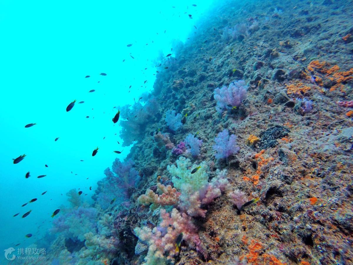帕劳5日4晚自由行·五星太平洋度假村海景房+免费