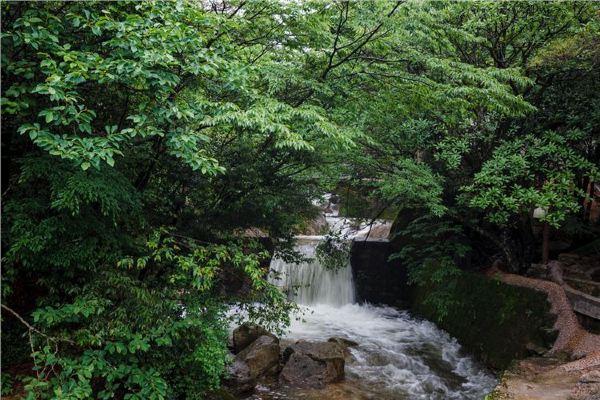 黄山四季各不同,春天的银杏树和枫树,春雨滋润后,更显苍翠,如果是