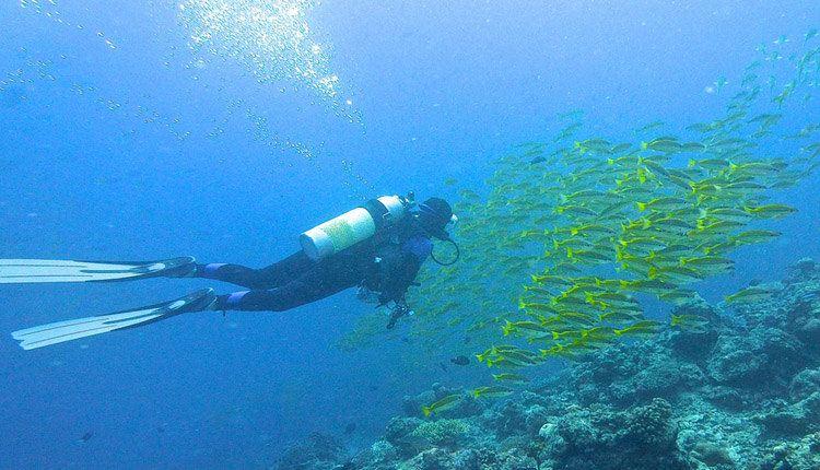 大堡礁船宿——在大堡礁参加深潜,观看海底世界的美观
