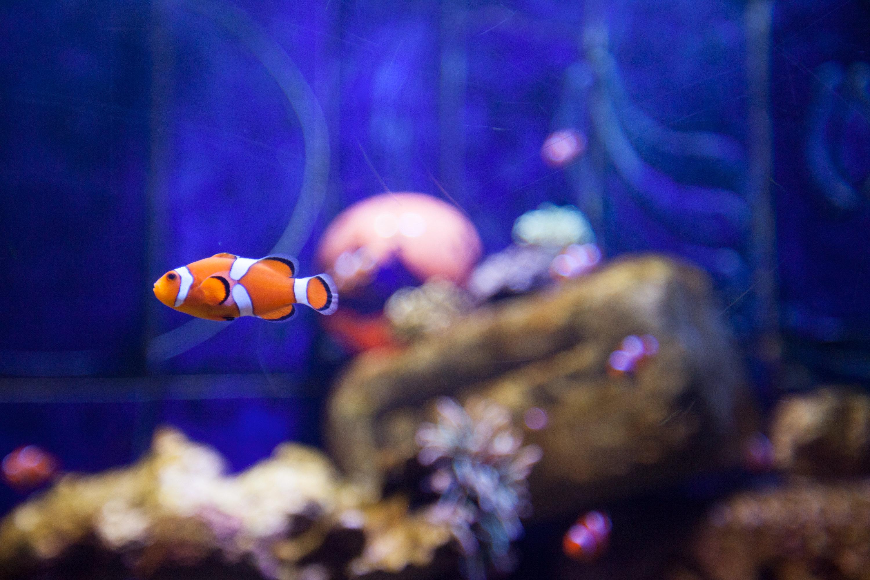 失落的空間水族館  The Lost Chambers Aquarium   -3