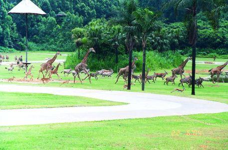 其以大规模野生动物种群放养和自驾