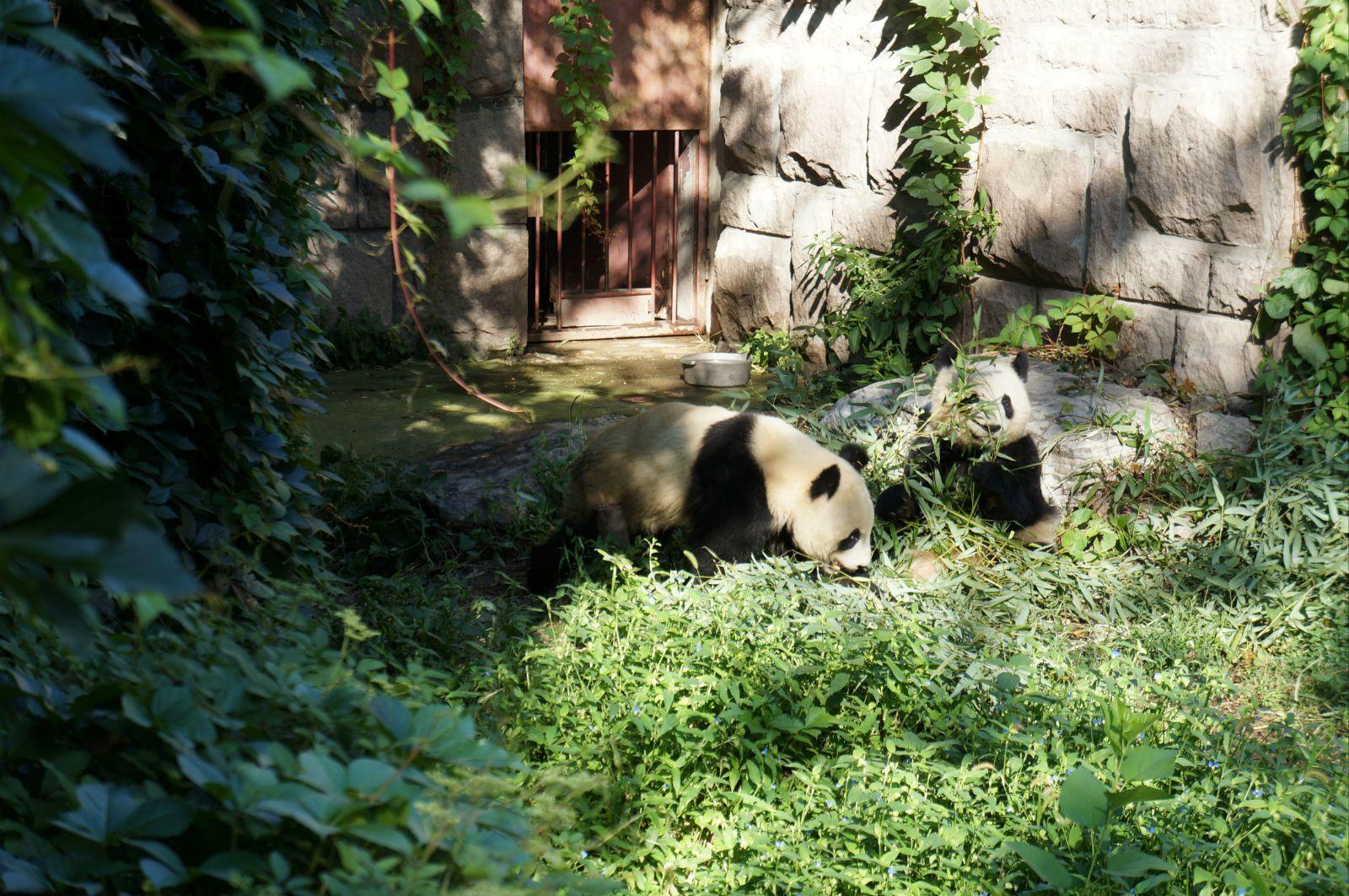 夜行动物 北京动物园 大熊猫馆