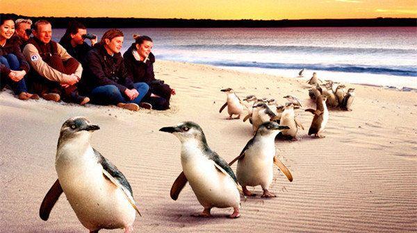 自然探索·魅力墨尔本三日游(企鹅岛,大洋路,十二门徒