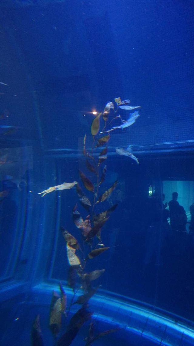 壁纸 海底 海底世界 海洋馆 水族馆 桌面 640_1137 竖版 竖屏 手机
