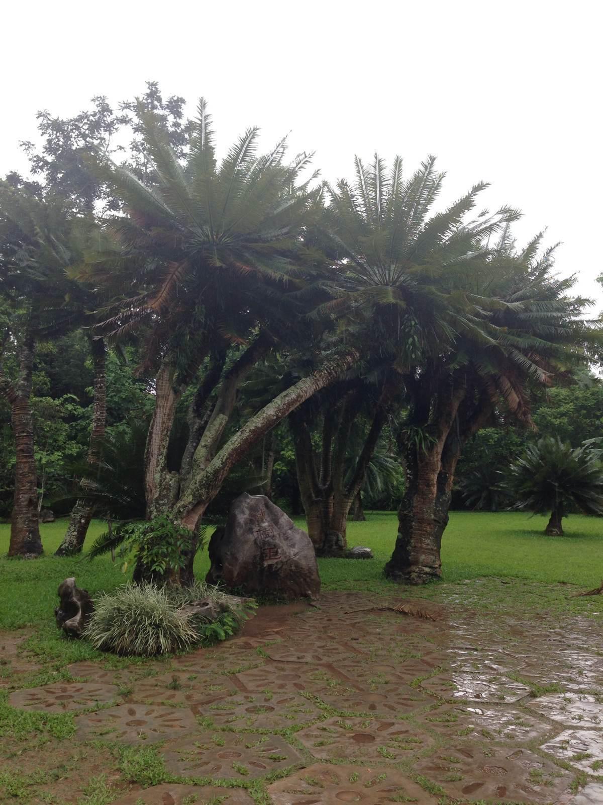 西双版纳热带雨林植物园