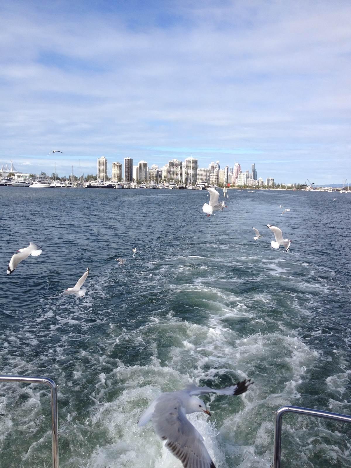 海鸥飞翔-游船活动内容之一面包喂食海鸥,引得成群海鸥跟船飞翔,举起