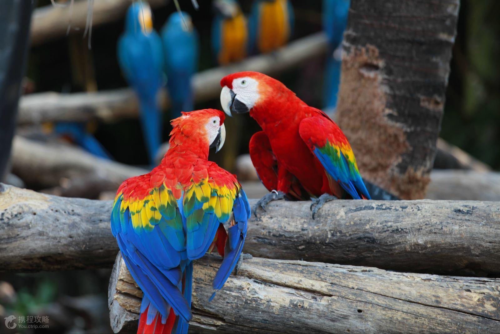 与世界各地的珍稀野生动物零距离亲密接触互动