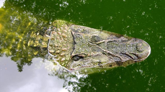 野猪,美洲豹,乌龟,蟒蛇,各种鸟类和鱼类等很多种亚马逊雨林动物.
