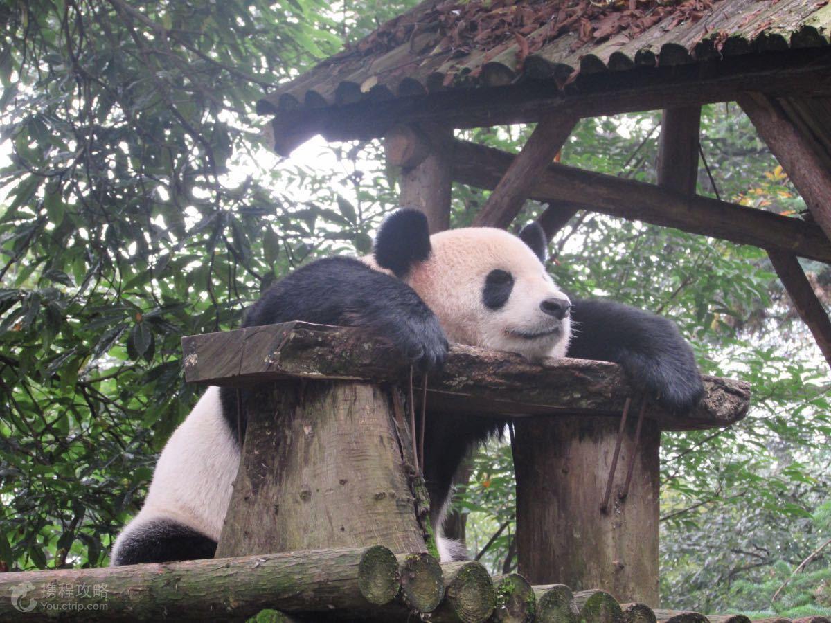 雅安碧峰峡动物园