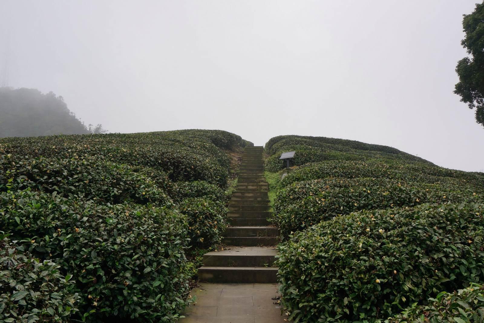 """""""茶山竹海森林公园"""",位于重庆永川城北2公里处.图片"""