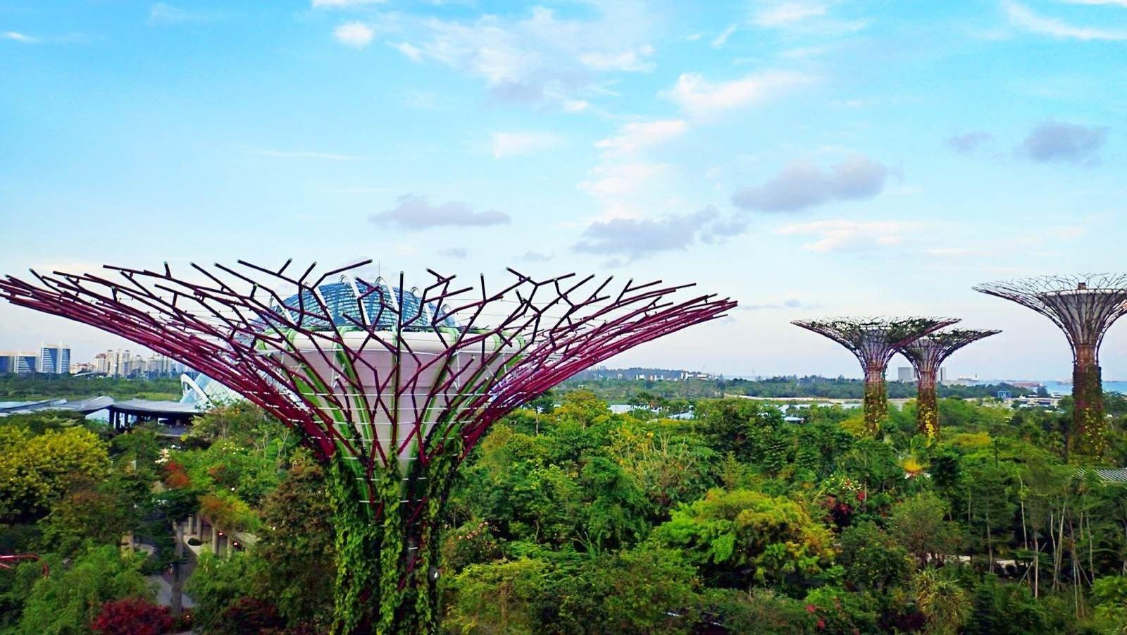 新加坡滨海湾花园图片