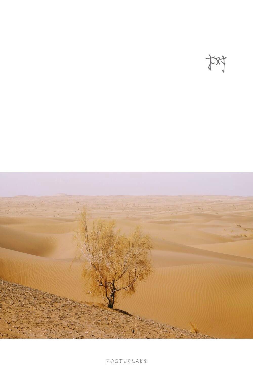 壁纸 沙漠 桌面 1000_1500 竖版 竖屏 手机