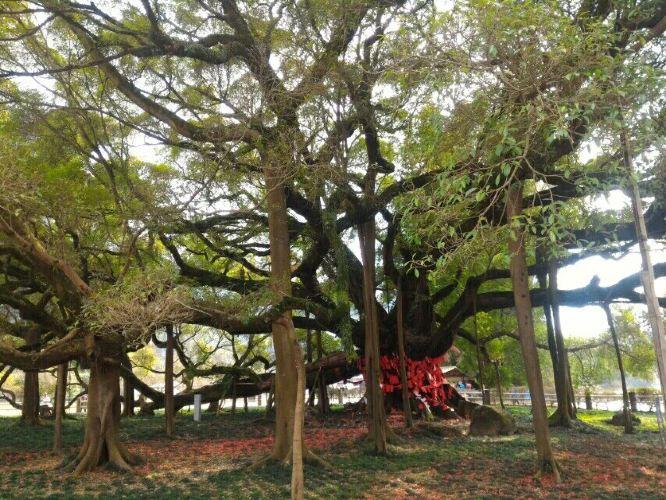 这棵树的年龄绝对比你年长